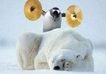 Пингвины и медведи picture