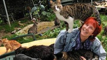 Томи Томек с кошками