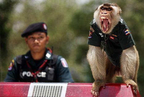 В Таиланде на службе в полиции провинции Яла состоит обезьяна