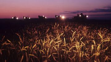 Ночная уборка пшеницы