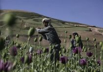 Афганистан опиум мак