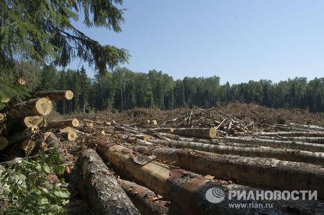"""Вырубка Химкинского леса началась со стороны """"Шереметьево"""""""
