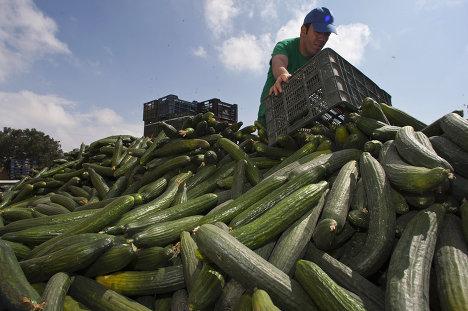 Фермер на юго-востоке Испании выбрасывает огурцы, не пригодные для продажи