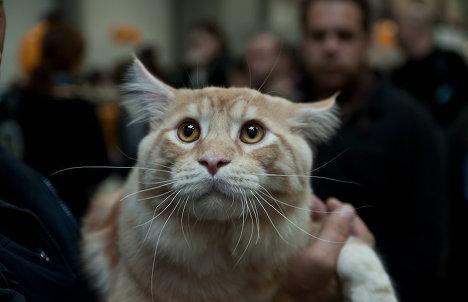 Шоу кошек «Экспокот 2011»