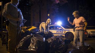 Крысиный патруль в Нью-Йорке