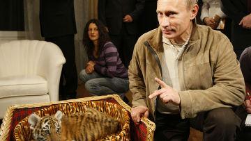 Не сойти с ума от Путина