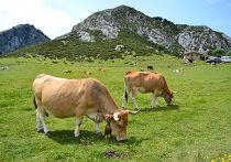 Сельская местность в Испании