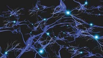Сколько именно мозга нам нужно?