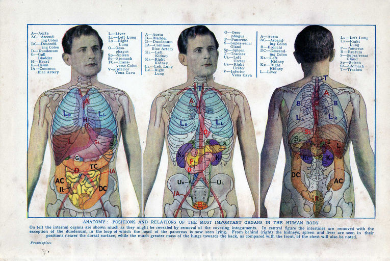 Винтажная анатомия