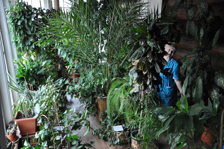 Оранжерея в доме-музее Волконских в Иркутске