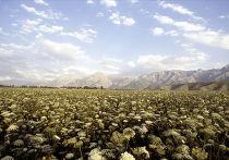 Ферганская долина в Узбекистане