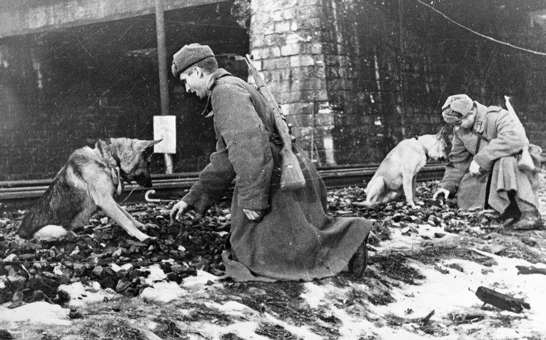 Советские саперы ищут с помощью собак мины на железнодорожном полотне в Будапеште