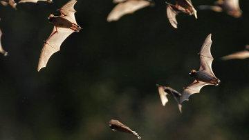 Летучие мыши в пещере в Бракен, штат Техас