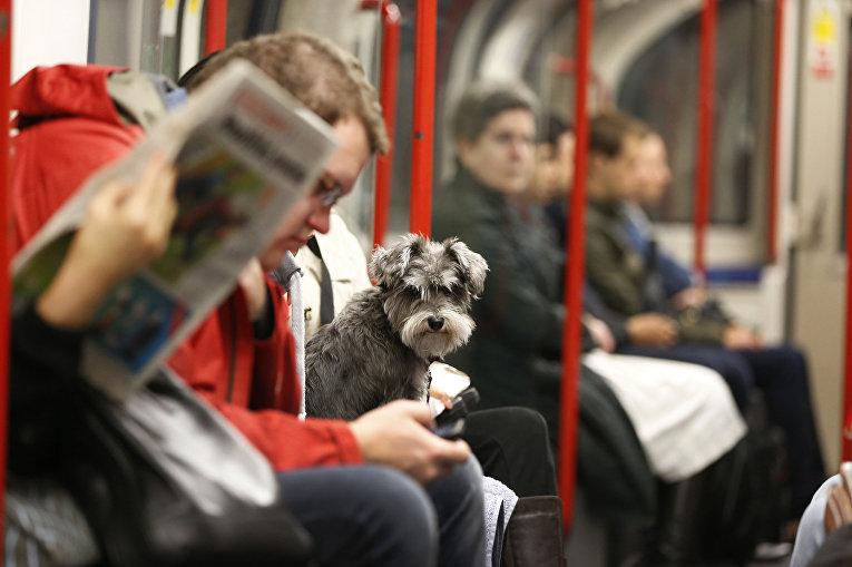 В вагоне лондонского метро