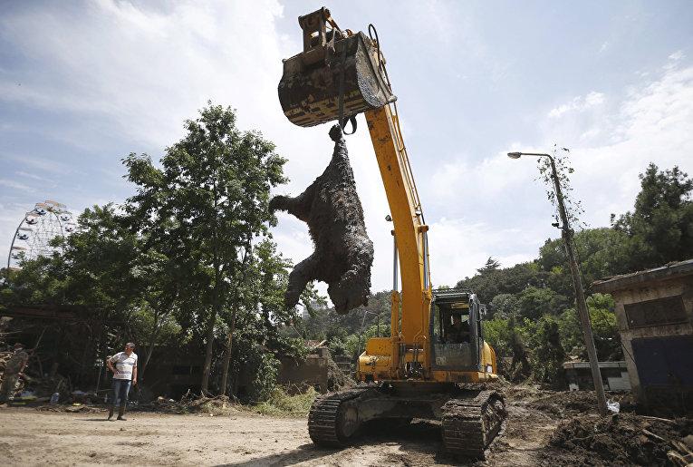 Экскаватор достает тело медведя, погибшего во время наводнения в тбилисском зоопарке