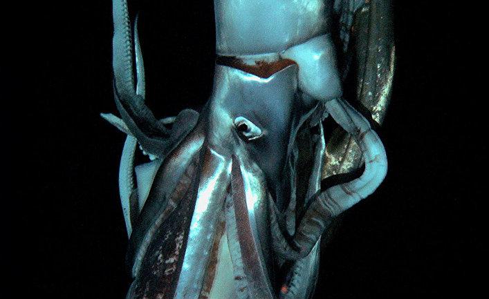 У берегов Японии обнаружено загадочное существо