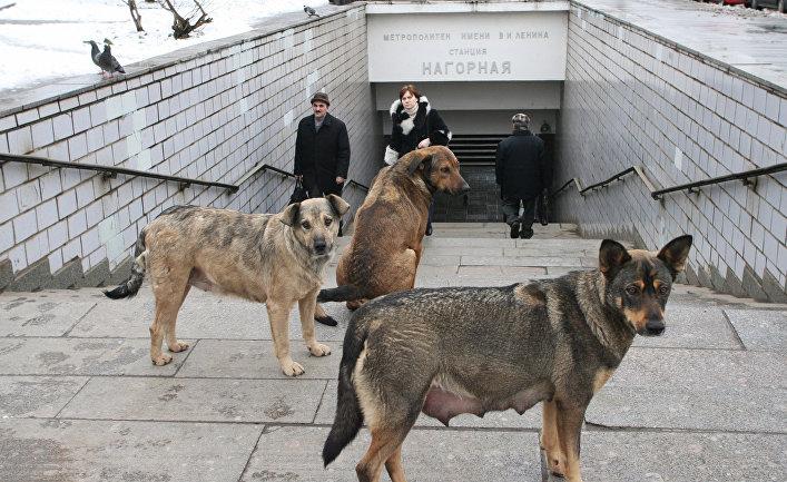 Бродячие собаки у входа в метро