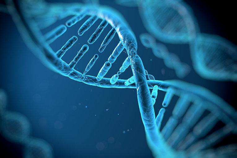 Фрагмент молекулы ДНК