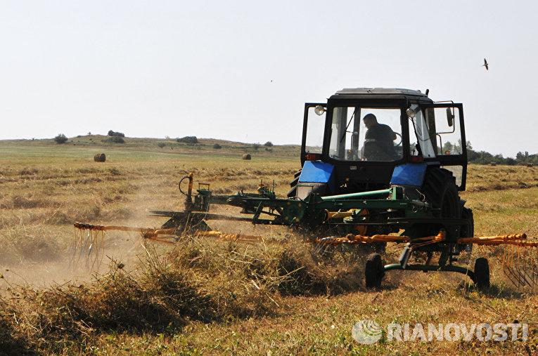 Заготовка сена на опытно-учебном поле Аграрного Университета силами студентов