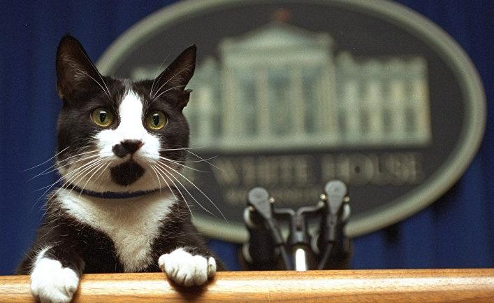 ВЕС уверенно  настроены против антироссийских санкций США