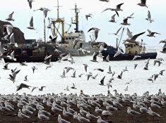 Остров Итуруп и залив Оля