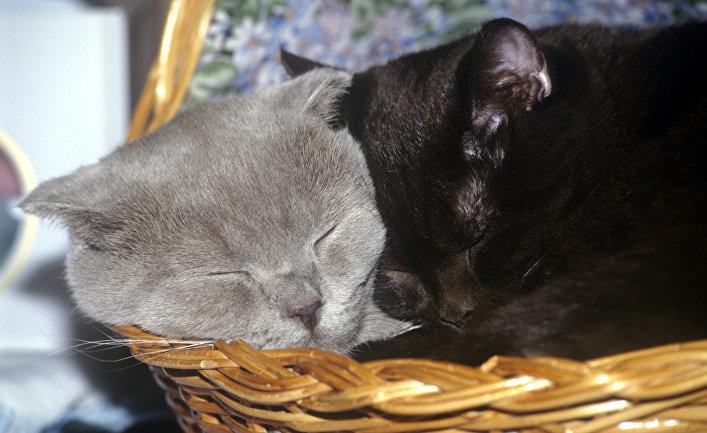 Кошки на выставке