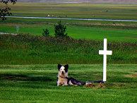 Собака у могилы