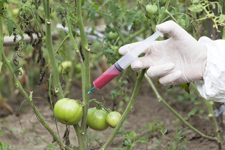 Генно-модифицированные овощи