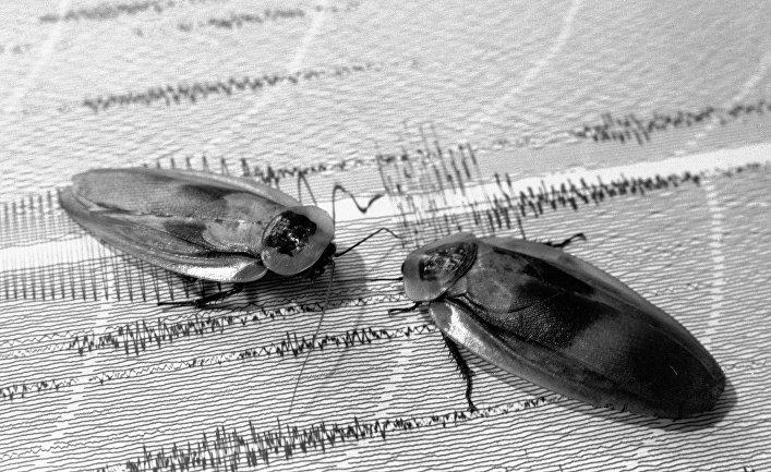 Ученые назвали назначение тараканов наЗемле