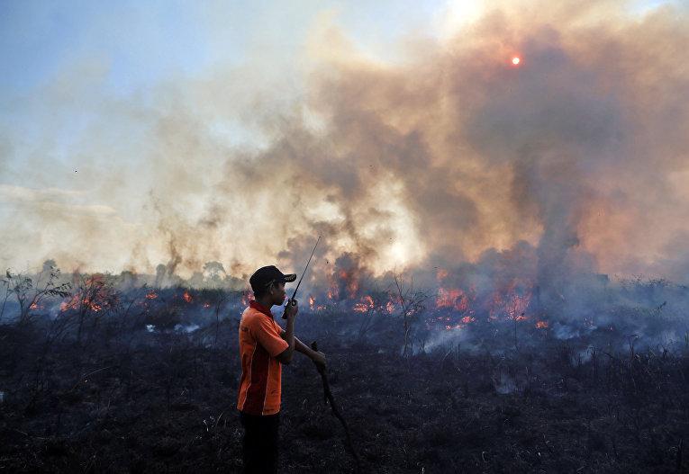 Лесные пожары в Индонезии