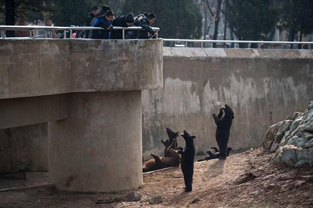 Медведи в центральном зоопарке на окраине Пхеньяна