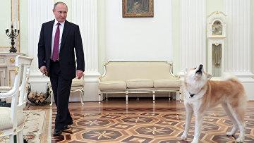 Президент РФ Владимир Путин с собакой Юмэ породы акита-ину