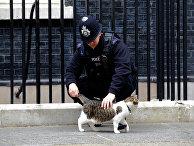 Лондонский полицейский гладит кота