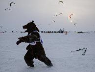 Спорстмен в костюме медведя во время соревнований на кубке Сибири по зимнему кайтингу на льду водохранилища Новосибирской ГЭС