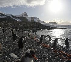 Пингвины на одном из островов в Антарктиде