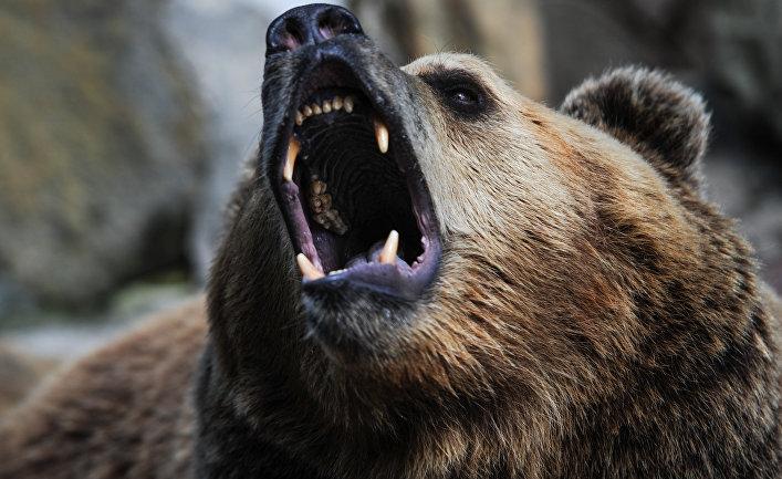 ИноСМИ: «Мягкая сила» русского медведя