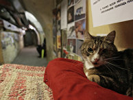 Кот в подвале Эрмитажа во время ежегодной акции «День эрмитажного кота»