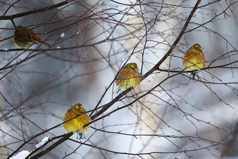 Птицы в Белоруссии