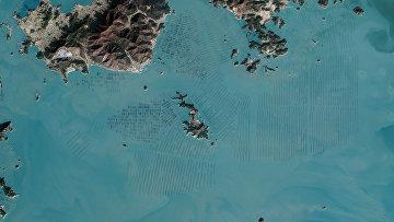 Водоросли у побережья Южной Кореи