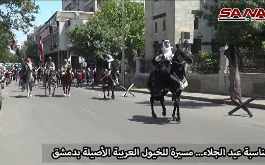 Парад чистокровных арабских лошадей в Дамаске в честь Дня независимости