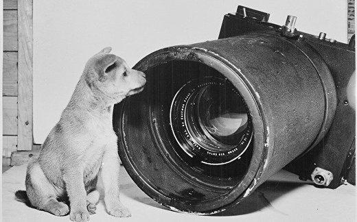 Щенок сидит около камеры серии Fifth Air Force aerial