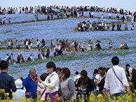 Туристы в Хитачи Сисайд-Парк в городе Хитатинака, Япония