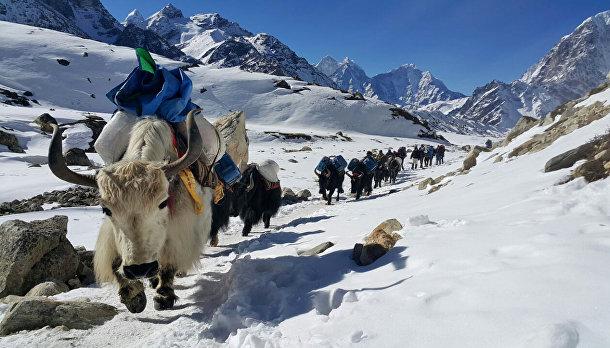 Восхождение на Эверест, 2015
