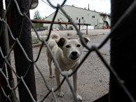 Собака за заобром склада посольства США на улице Дорожной в Москве