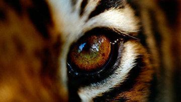 Амурский тигр, дальневосточный леопард, снежный барс, зубр находятся под патронажем WWF