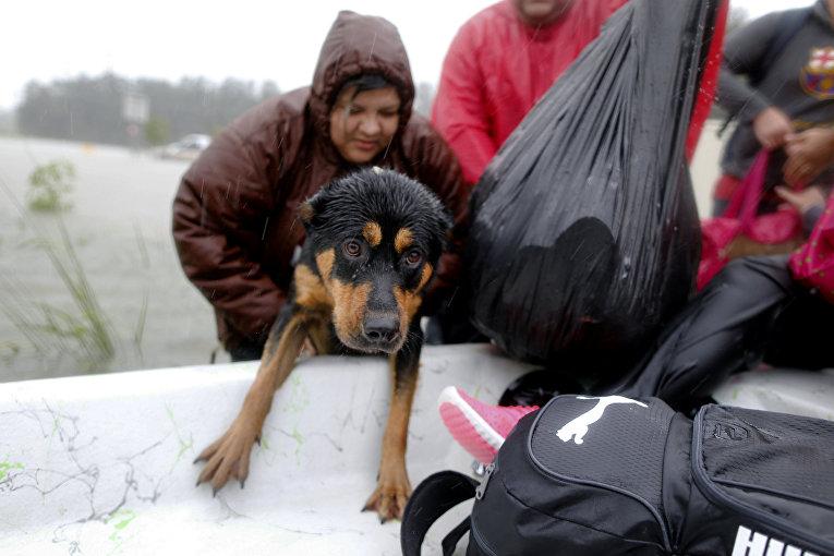 Этот спасенный пес все же промок до нитки