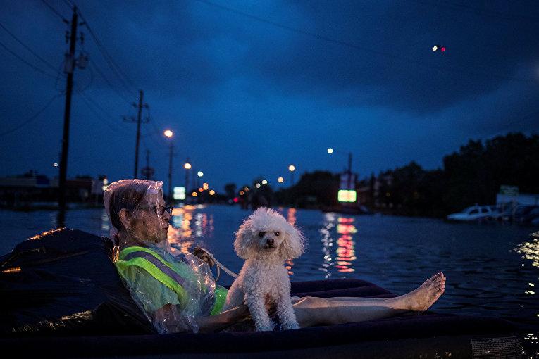 Женщина и ее питомец ожидают спасателей