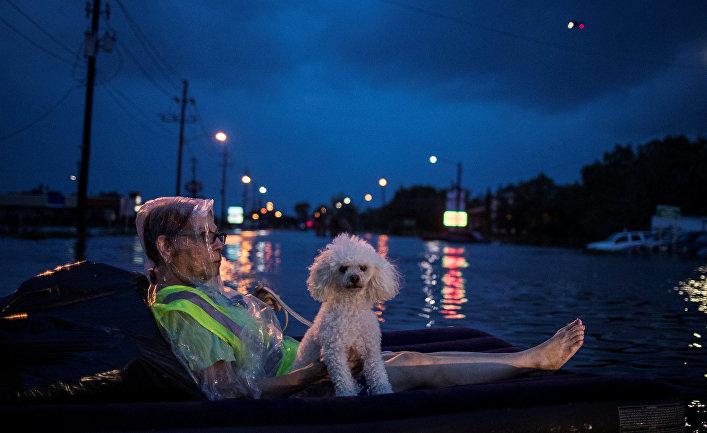Женщина и ее питомец ожидают спасателей.