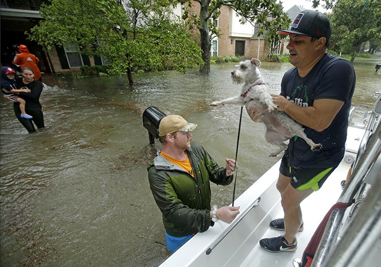 Добровольцы и спасатели отвозят собак в безопасное место