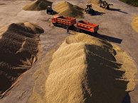 Зерновой ток в Новосибирской области